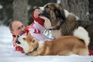 President Putin and his dogs Yume, an Akito-Inu, front, and Buffy, a Bulgarian Shepherd