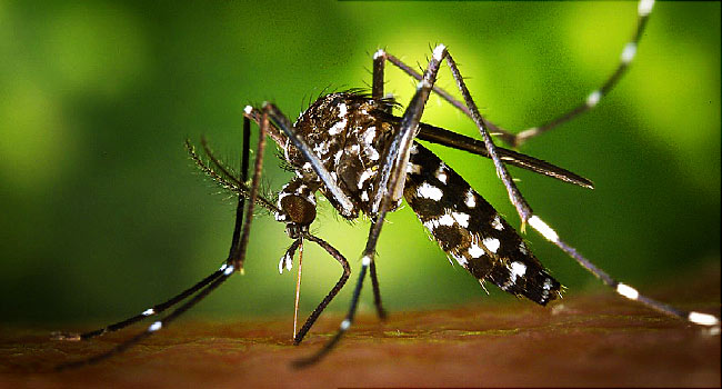 Zika hoax: strategy of liars, house of cards | Jon Rappoport's Blog