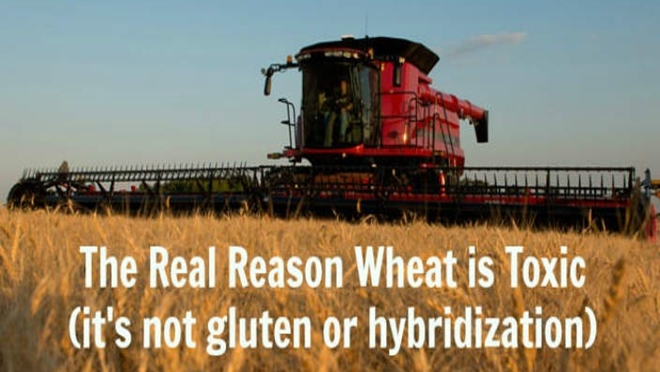 The Real Reason Wheat is Toxic (it's not the gluten) – Prepare for Change